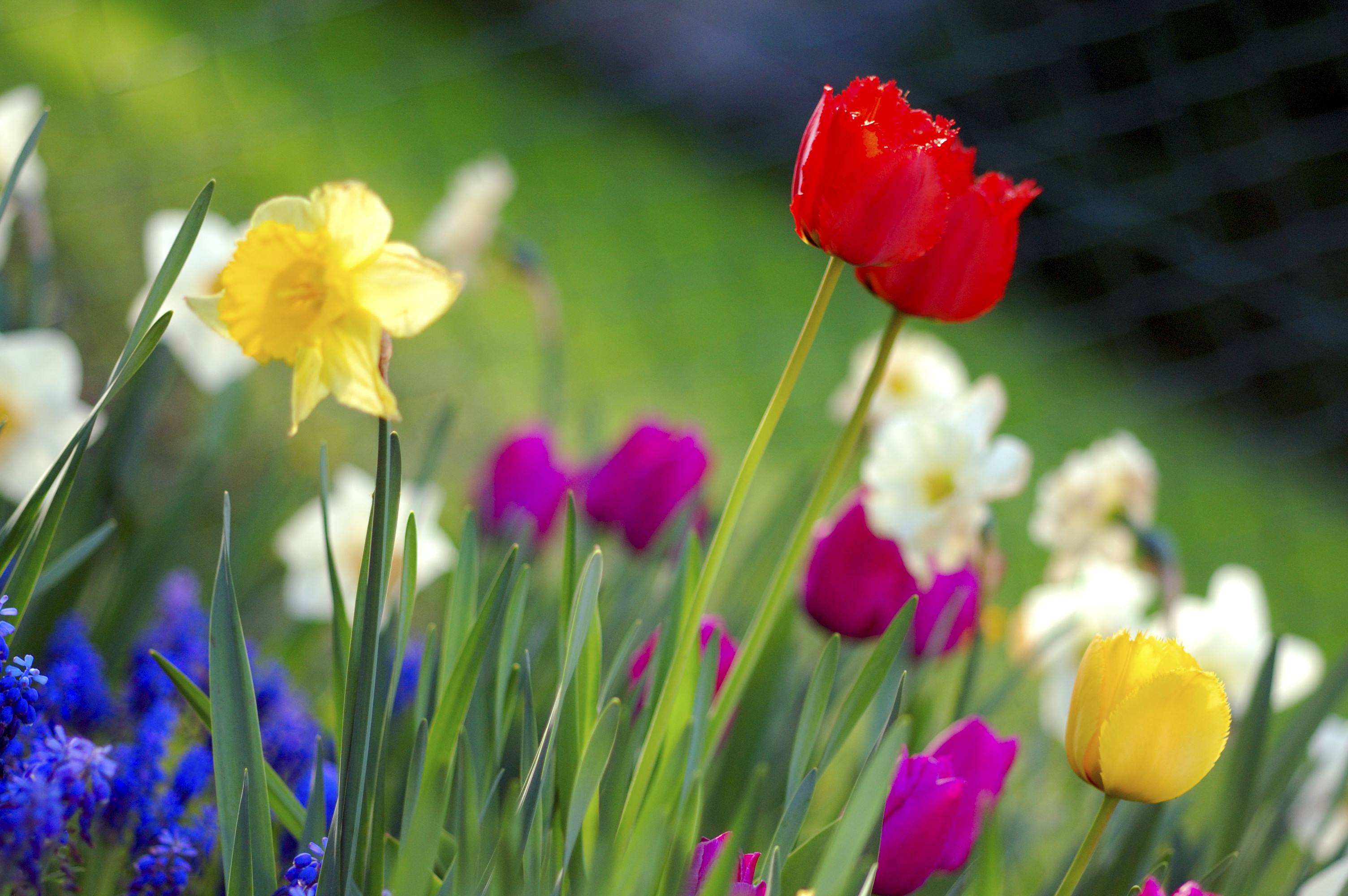 Dantry Spring Walk – Sunday May 18th