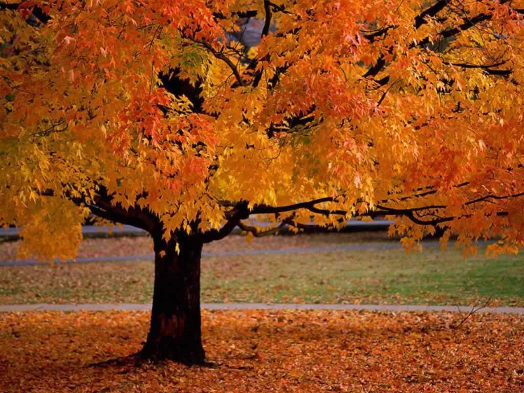 Dantry Fall Walk – Sunday November 3rd!